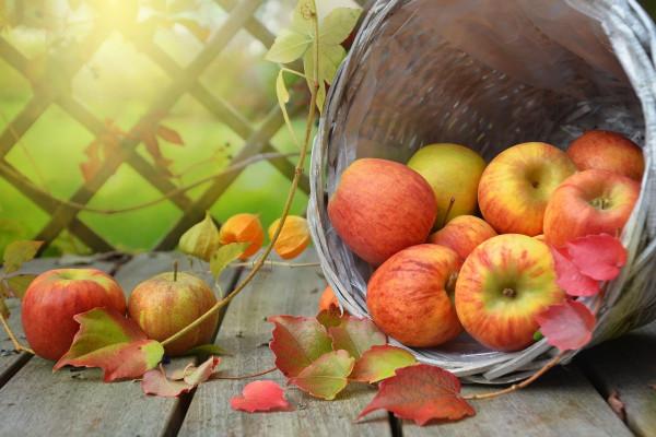 apple-1776744_1280
