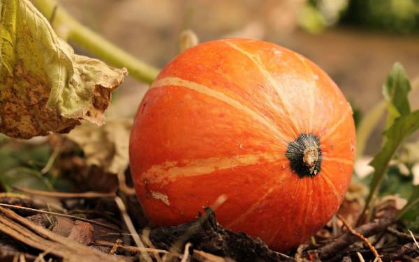 pumpkin-3806393_1280