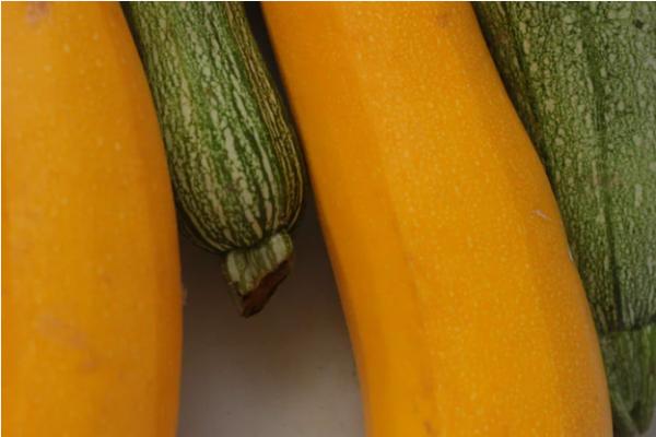 Screenshot-2021-10-04-at-10-46-20-Zucchini-R-schen-Pictures-Download-Free-Images-on-UnsplashwlBqhStsHShLz