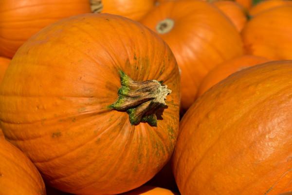 pumpkin-3636243_1280
